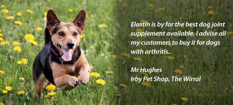 Dog arthritis supplement