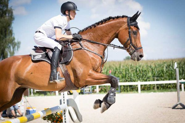 Natural Horse Nutrition