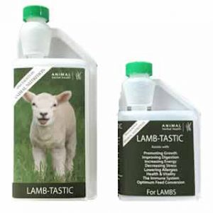 LambTastic - Herbal Supplement for lambs