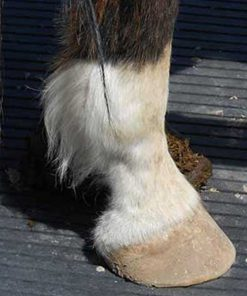 Feathers on Horse